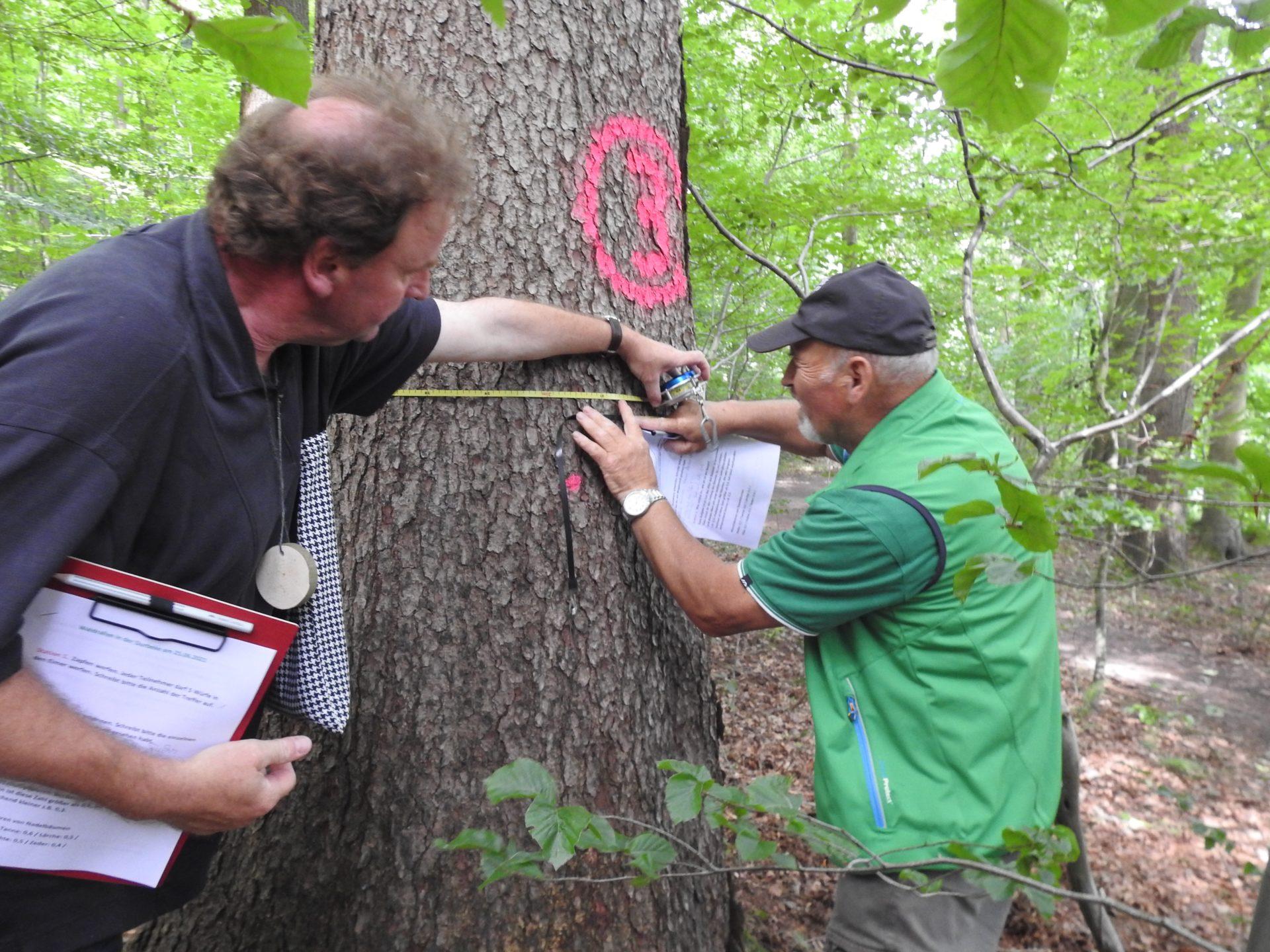 Zwei Zwei Männer in Outdoorkleidung messen den Baumumpfang einer Buche im Wald